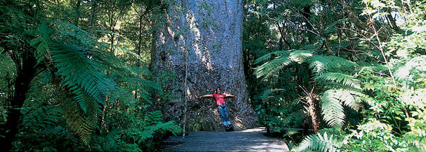 Explore the West Coast and discover the Kauri Coast at its best